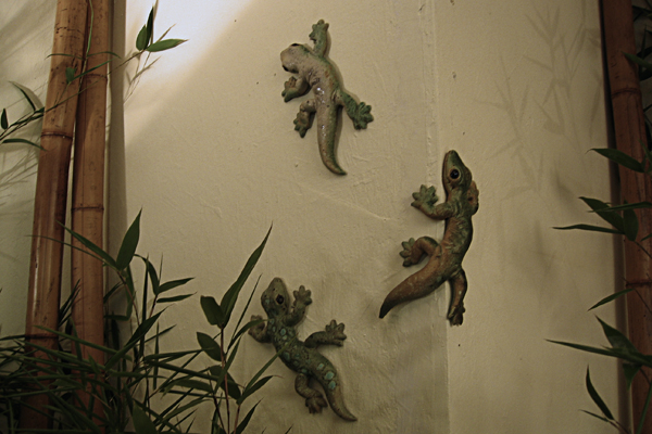 Geckos, klein 1